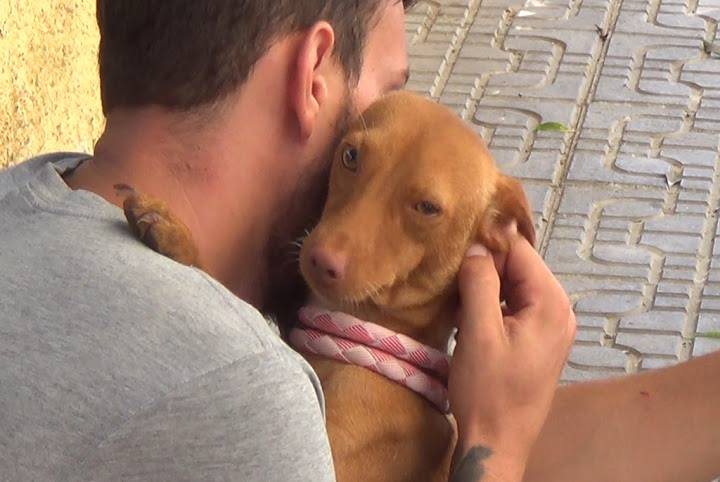 Image result for Vizsla Hund berühre den Bauch